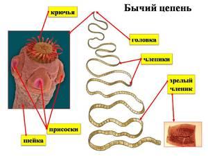 Чем опасны паразиты