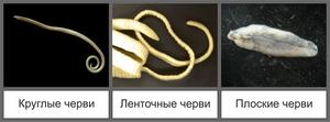 Разновидности паразитов