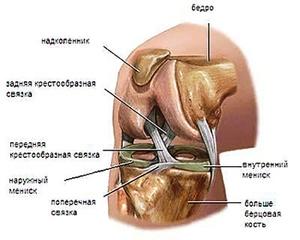 Как устроены колени человека